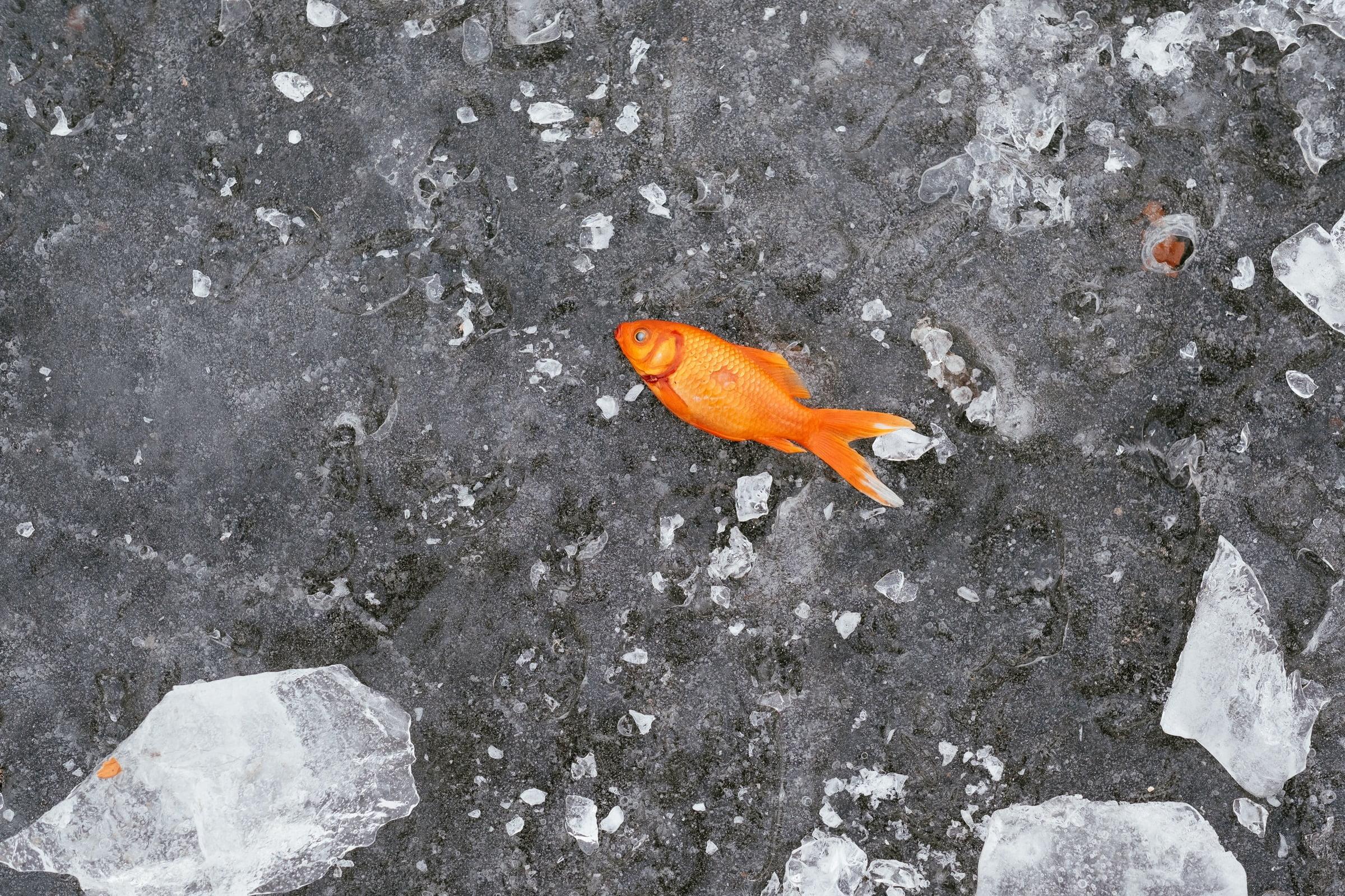 聲明稿:保衛漁民海洋永續生存權,抗議日本決定排核廢水入海,反對以鄰為壑的轉型軍國主義